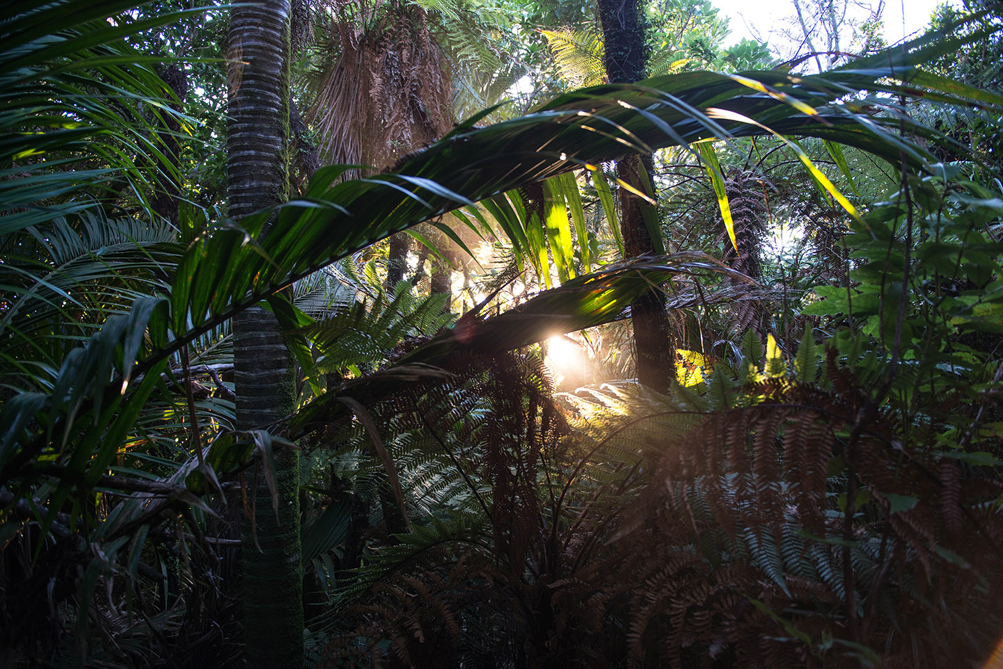 NZ_urwald_web_2229