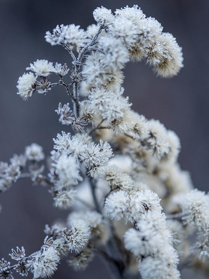winter_web_8342